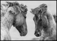Wild Mustang Horses Poster
