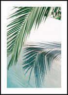 Poolside Palm Leaf Poster