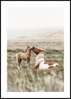 Horses on Field Poster