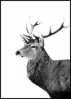 Stag Profile Poster