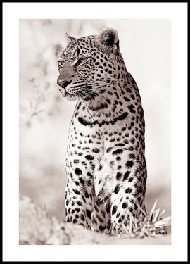 Leopard in the wild Poster