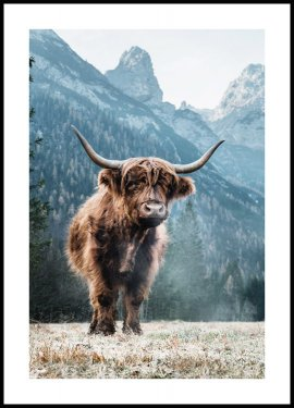 Dolomites Highland Cow Poster