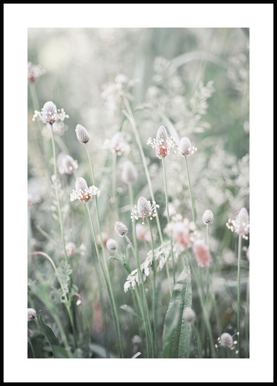 Flowers in a Meadow Poster