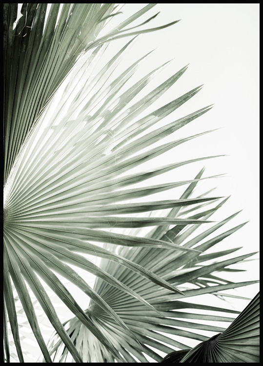 Green Palm Leaves No2 Poster