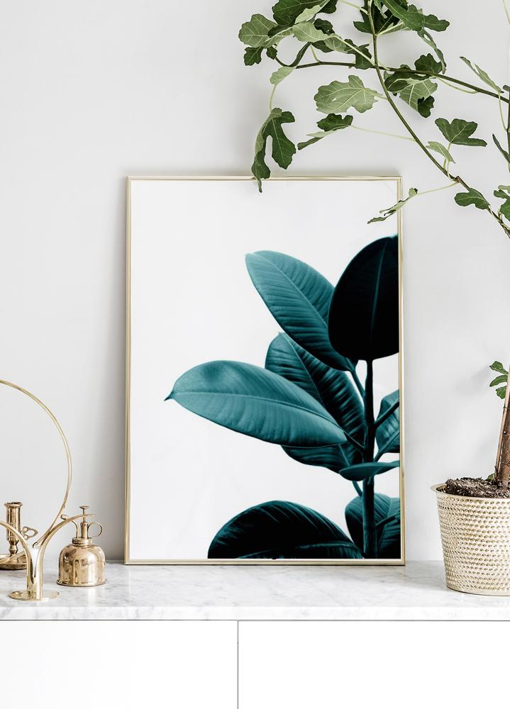 Green rubber plant Poster