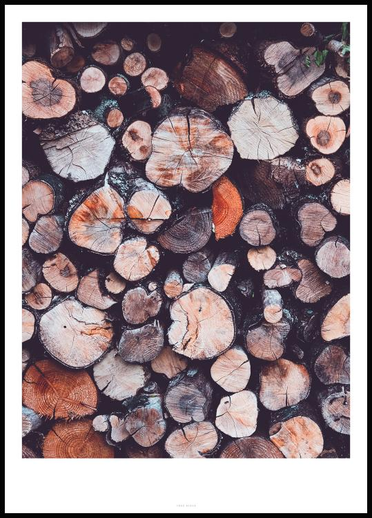 Tree Rings Poster